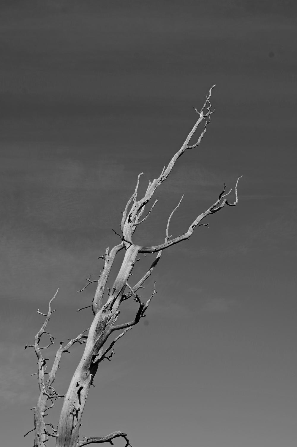 arbre à son dernier repos