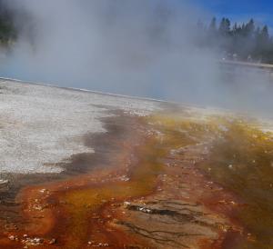 Bacterie hydrothermales tout en couleur