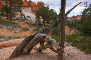 Des arbres tordus comme sculture