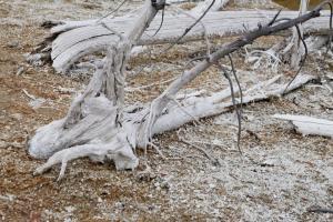 Du bois en train de se pétrifier, non pas de la neige