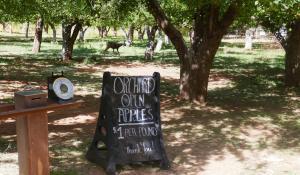 Fruita, on cueille du camping avec les cerfs