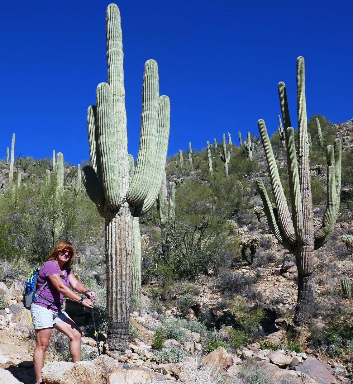 Les Saguaros, plus de 60 ans celui-ci