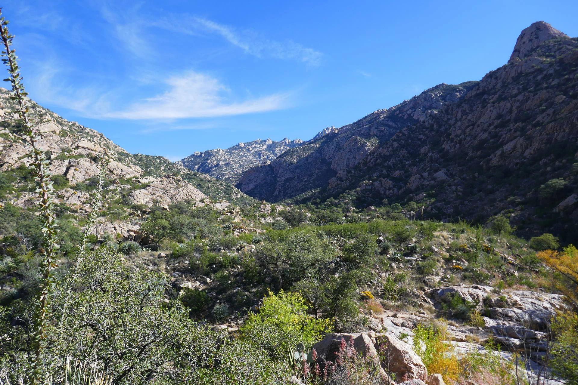 Mont Catalina