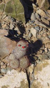 Oui c'est un cactus, il est adorable