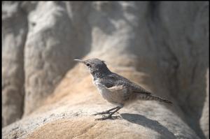 Roosevelt NP Un ebl oiseau