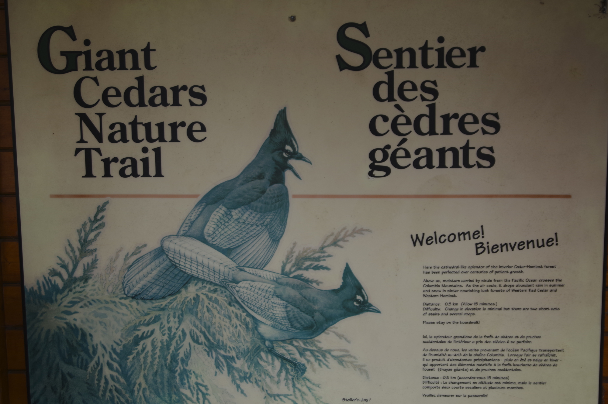 Sentier cêdre géants