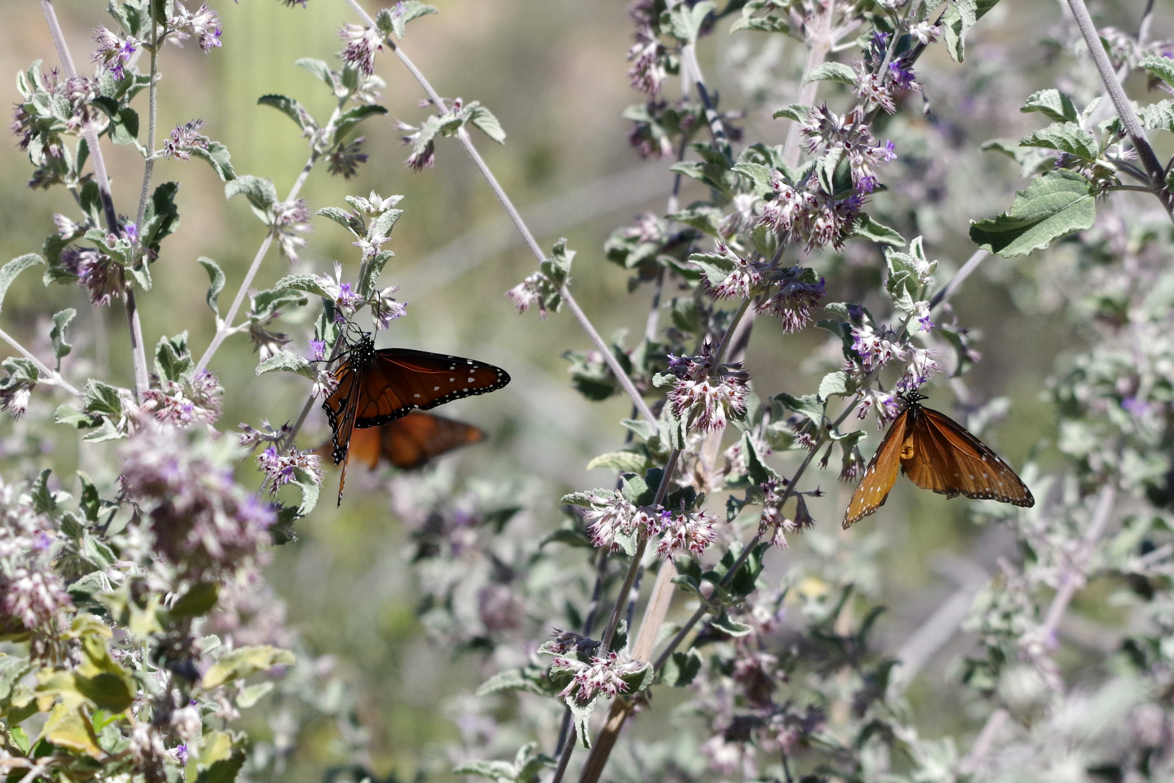 Un beau groupe de papillon