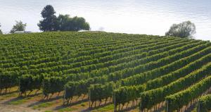 Vignoble sur le Lac Okanagan