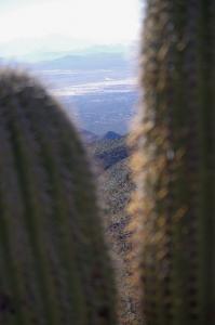 Vue sur Tucson entre 2 Saguaros